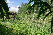 Jardin respectueux