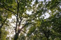 Forêt de la Braconne