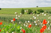 120608-005-chateauneuf